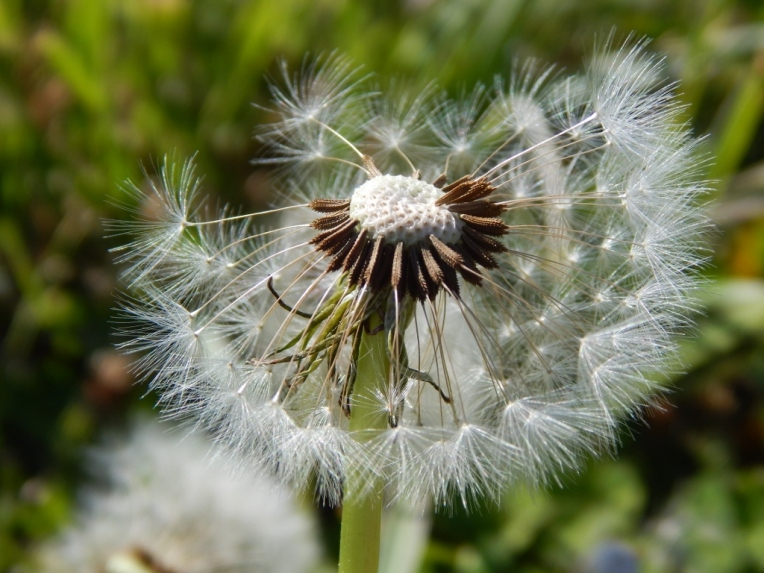 flowers (48) (1024x768)