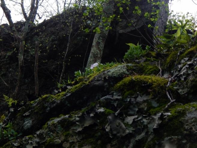 hike (65) (1024x768)