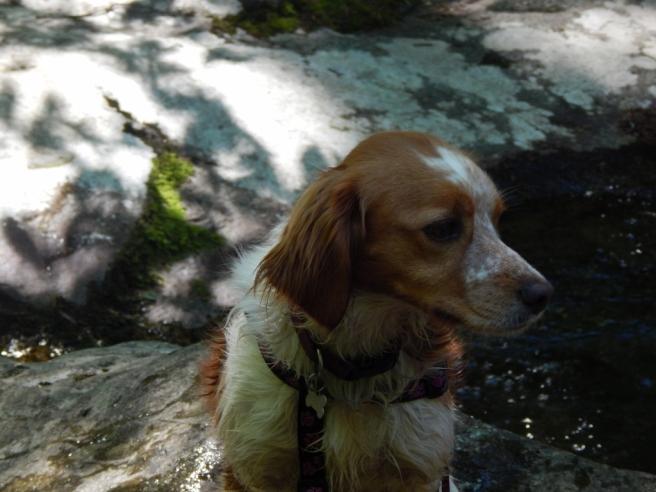 -Allison(hike) 127 (1024x768)