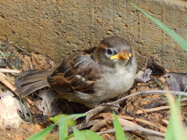 -Allison(kitten, baby bird) 002 (1024x768)