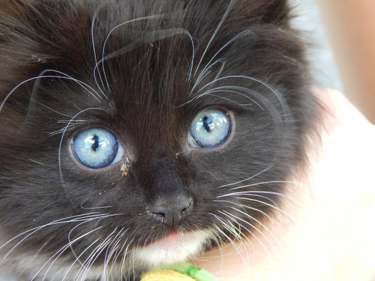 -Allison(kitten, baby bird) 006 (1280x960)