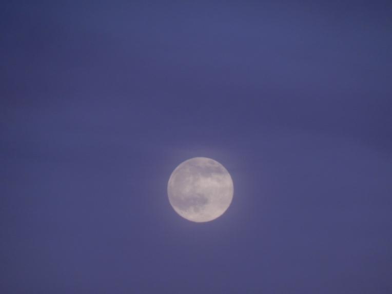 -Allison(moon, lily, Maggie) 002 (1024x768)