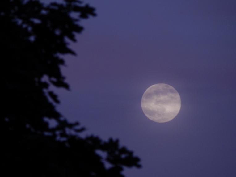 -Allison(moon, lily, Maggie) 005 (1024x768)