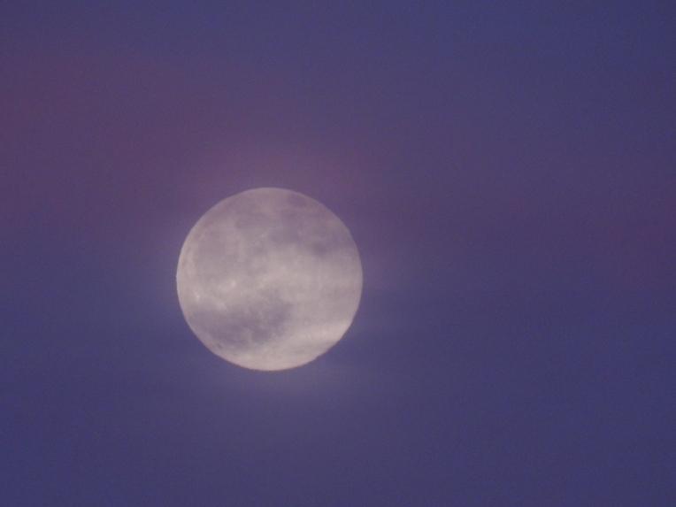 -Allison(moon, lily, Maggie) 010 (1024x768)
