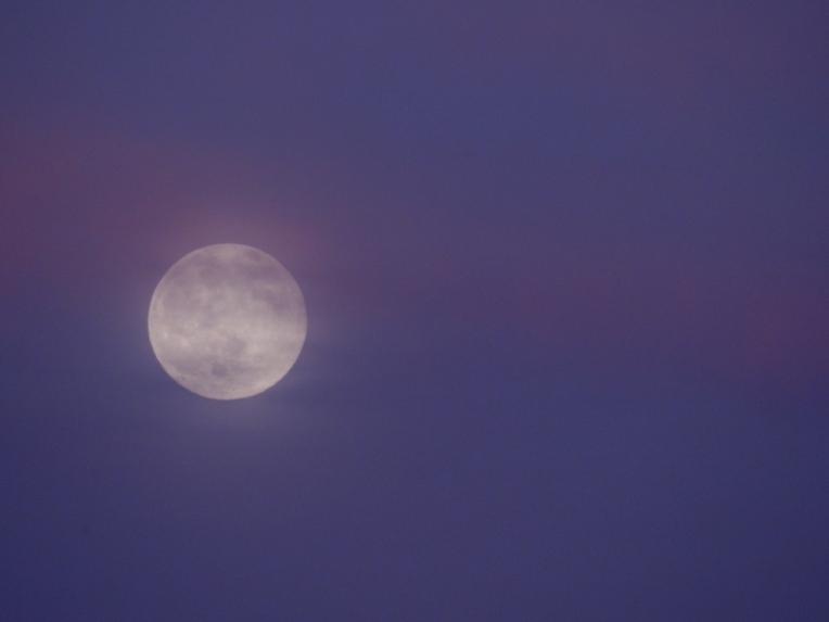 -Allison(moon, lily, Maggie) 011 (1024x768)
