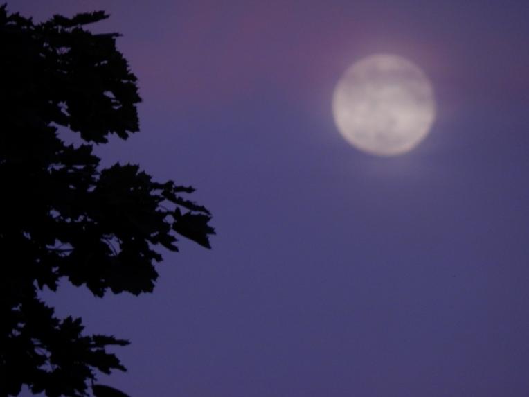 -Allison(moon, lily, Maggie) 012 (1024x768)