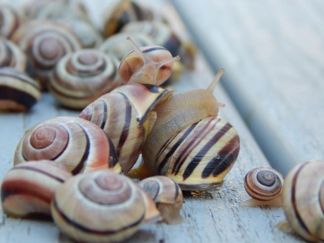 -Allison(rainbow, snails) 056 (1024x768)