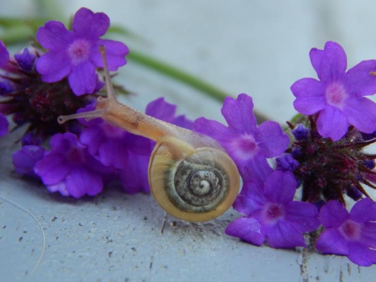 -Allison(rainbow, snails) 060 (1024x768)
