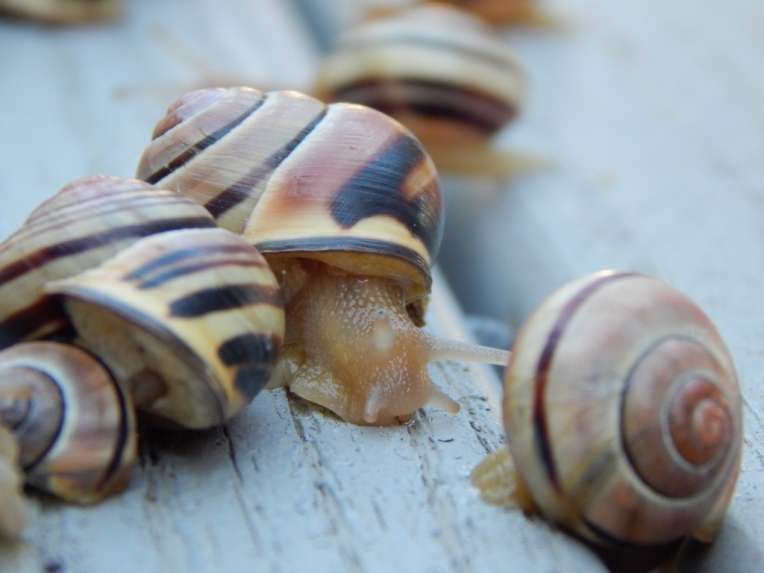 -Allison(rainbow, snails) 061 (1024x768)