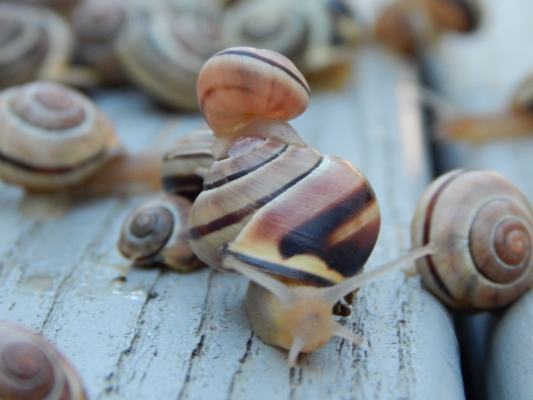 -Allison(rainbow, snails) 065 (1024x768)