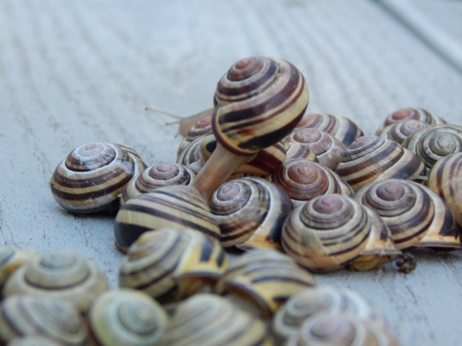 -Allison(rainbow, snails) 073 (1024x768)