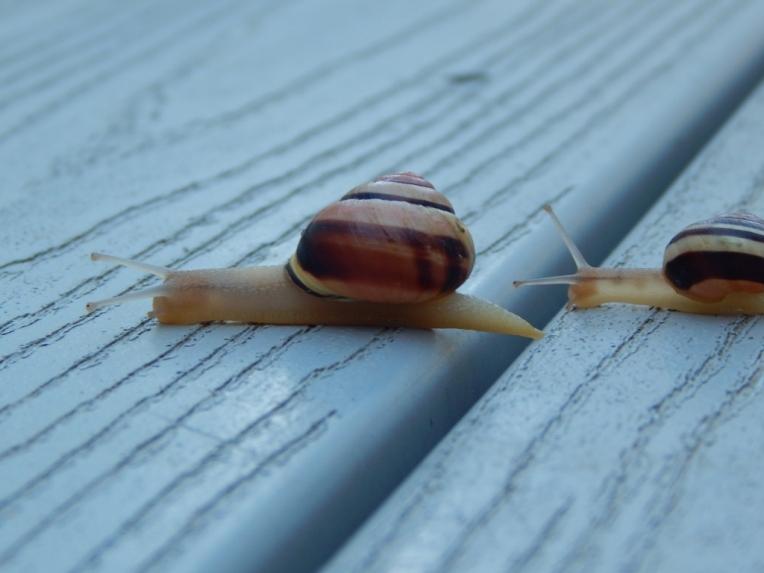 -Allison(rainbow, snails) 075 (1024x768)