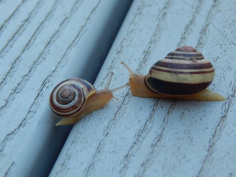 -Allison(rainbow, snails) 079 (1024x768)