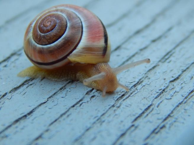 -Allison(rainbow, snails) 082 (1024x768)