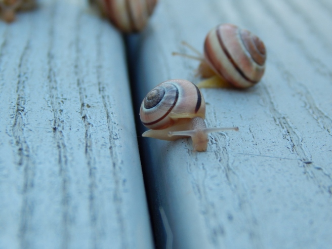 -Allison(rainbow, snails) 085 (1024x768)