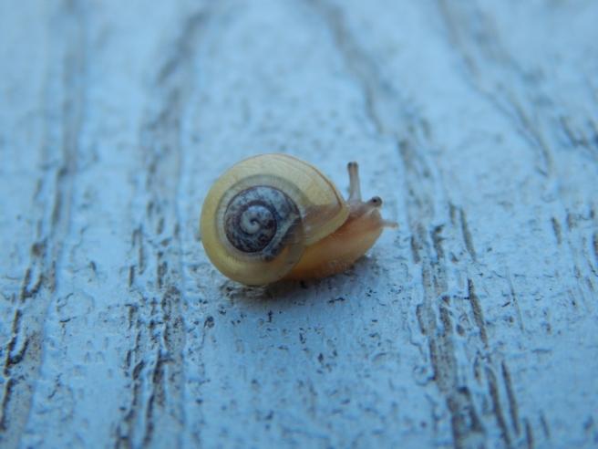 -Allison(rainbow, snails) 088 (1024x768)