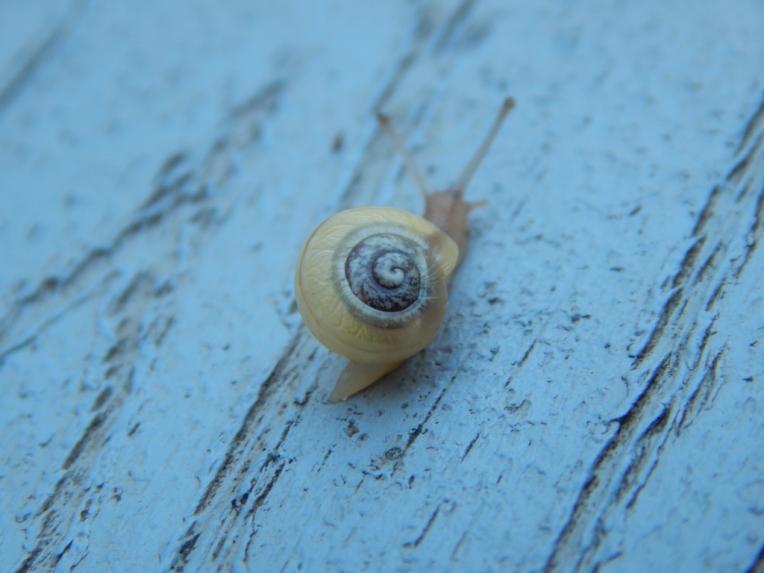 -Allison(rainbow, snails) 089 (1024x768)