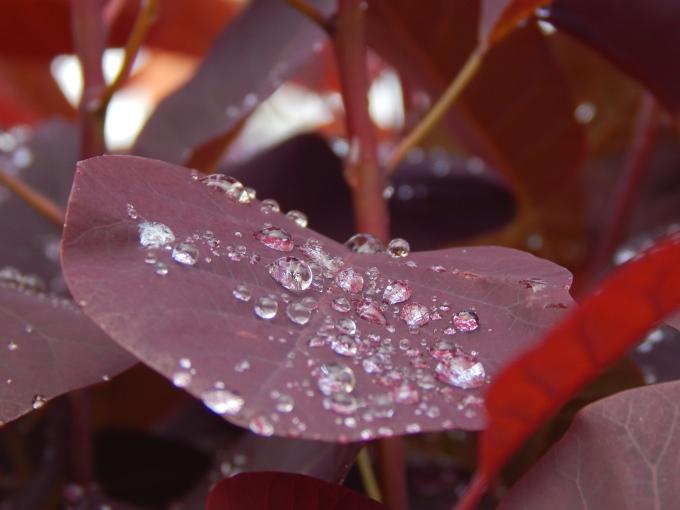 raindrops 3 (680x510)