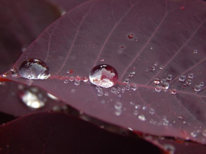 raindrops 9 (680x510)