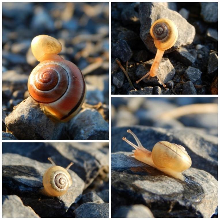 snail collage 2 (800x800)