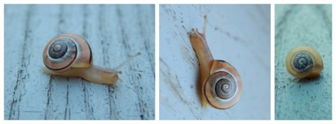 snail collage 3 (800x296)