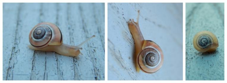 snail collage 3 (800x296)