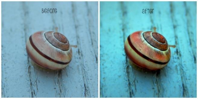 snail collage (800x400)