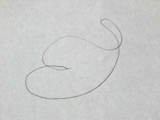 squiggle doodle 1