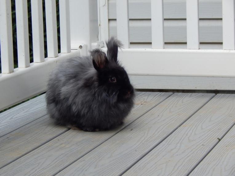 -Allison(bunnies) 020 (1024x768)