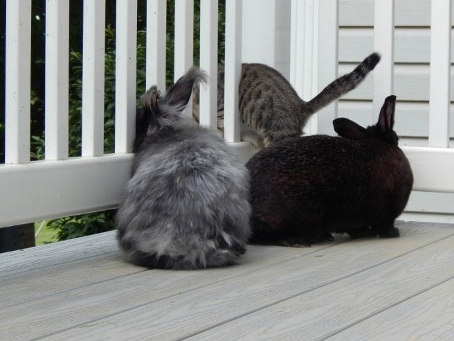 bunnies 1 (1024x768)