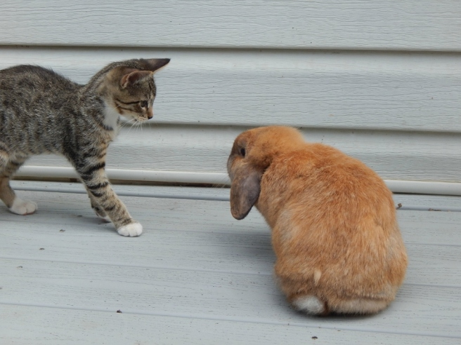 bunnies 2 (1024x768)