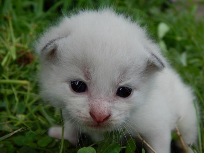 kitten (1024x768)