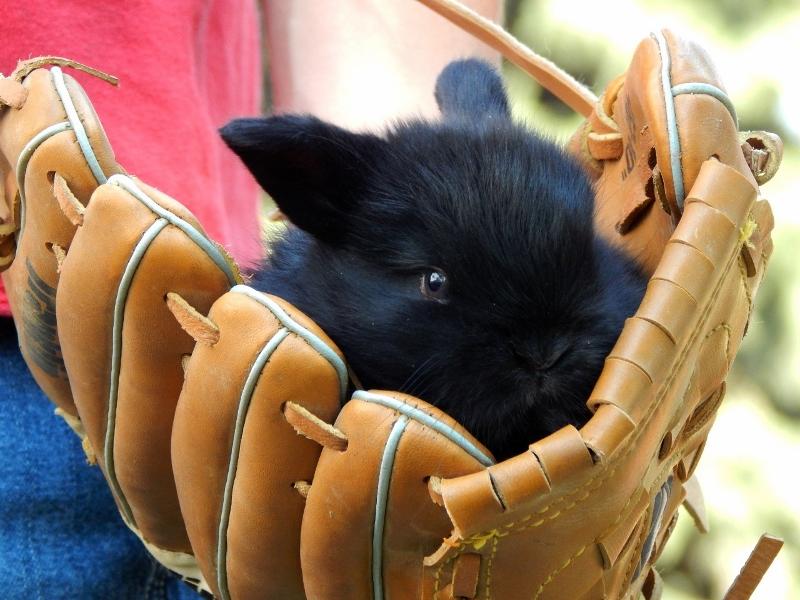 allisonbaby-bunnies-247-1280x960-800x600
