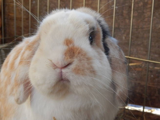 allisonart-bunnies-062-1280x960-800x600