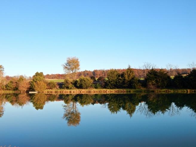 pond-6-800x600