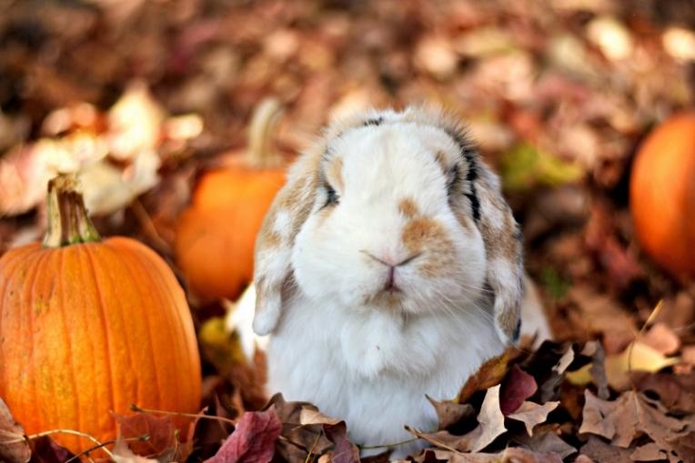 bunnies12 (1280x853) (800x533)
